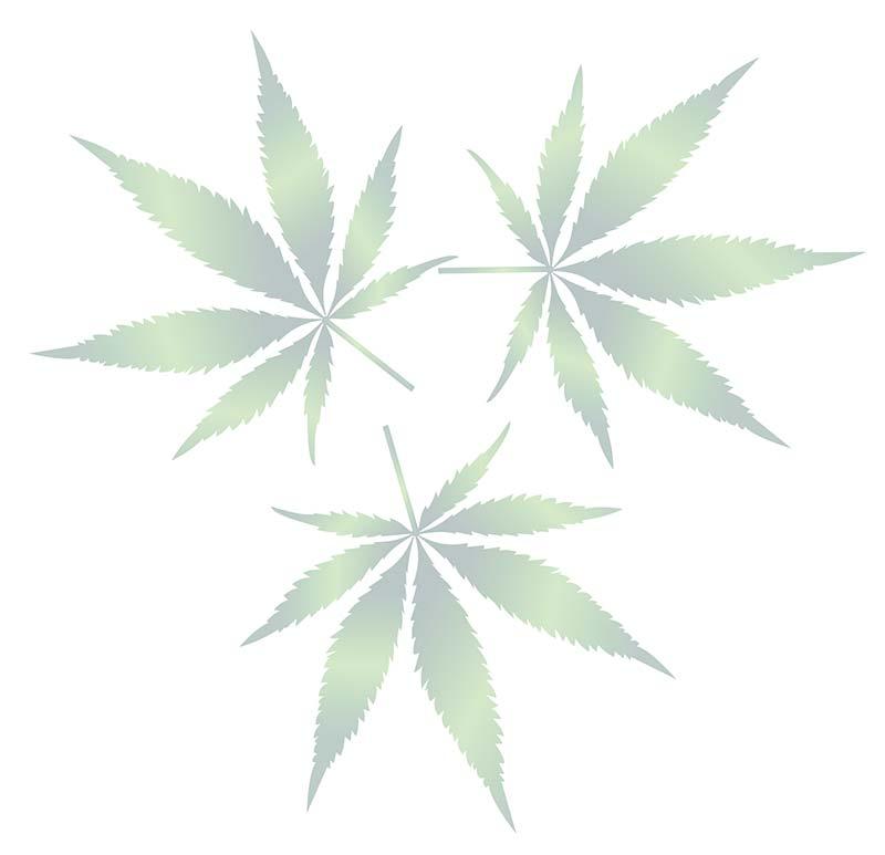 cannabis-plant-leaves