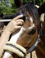 Airnergy-Stream-Horse-Treatment
